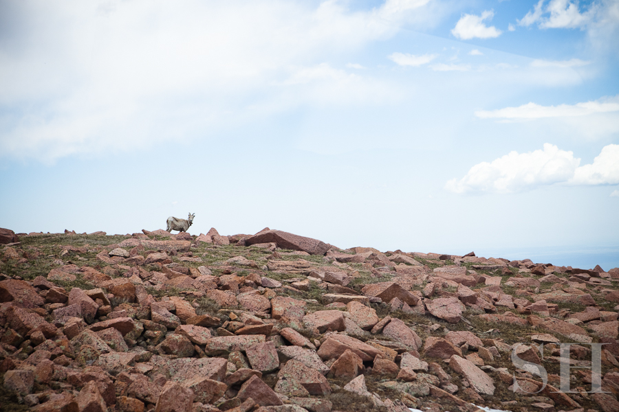 Colorado, mountains, Pike's Peak, mountain goat