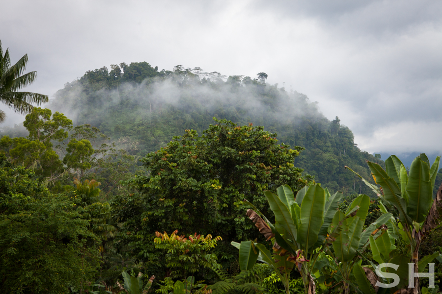 Papua New Guinea, Gwahatike, Translation, Mountains, Highlands, PNG